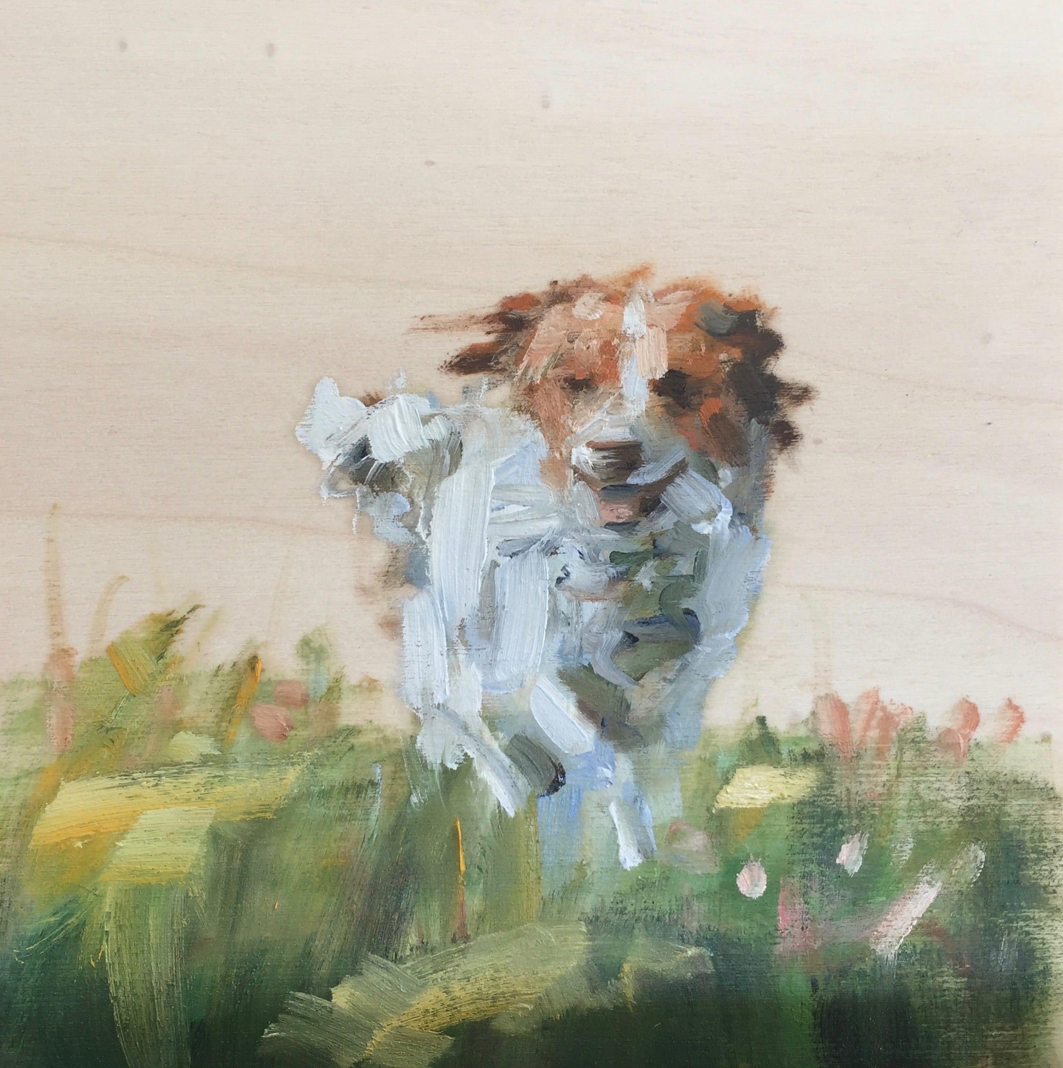 puppy in het veld